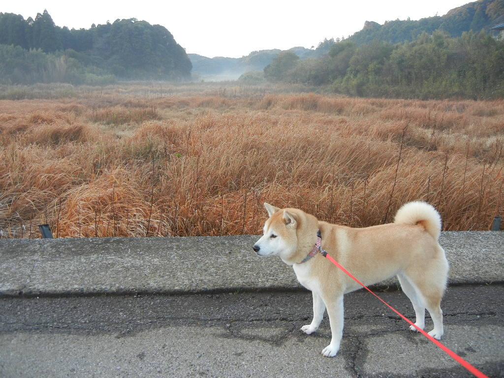 2011年12月15日(木)美味しそうなさつま揚げ!_f0060461_13302154.jpg