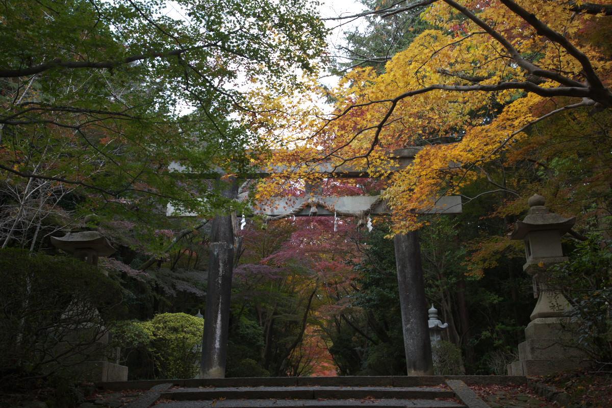 紅葉 2011 西山 大原野神社_f0021869_1045206.jpg