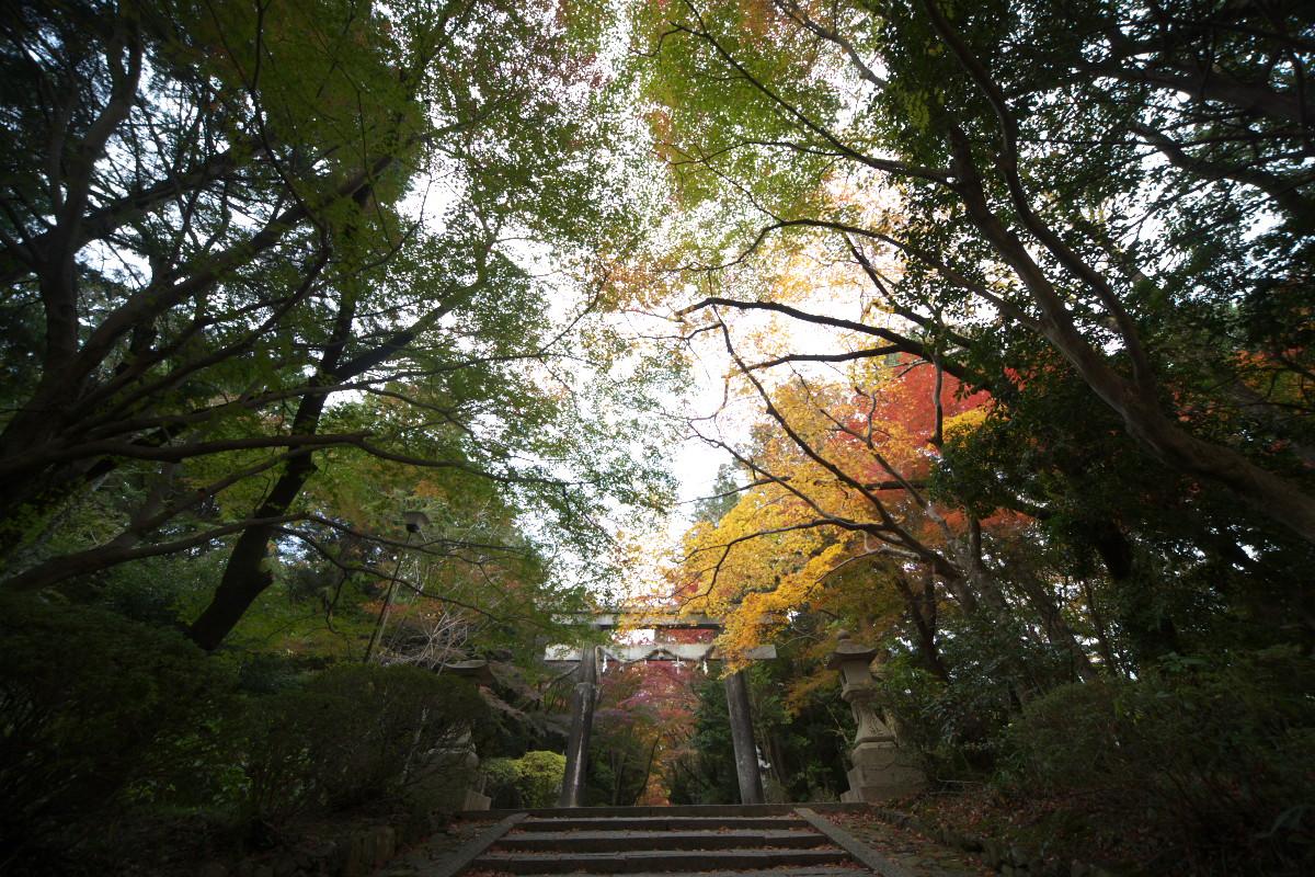 紅葉 2011 西山 大原野神社_f0021869_10463120.jpg