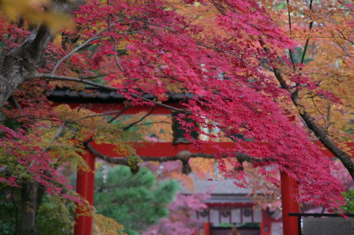 紅葉 2011 西山 大原野神社_f0021869_10494830.jpg
