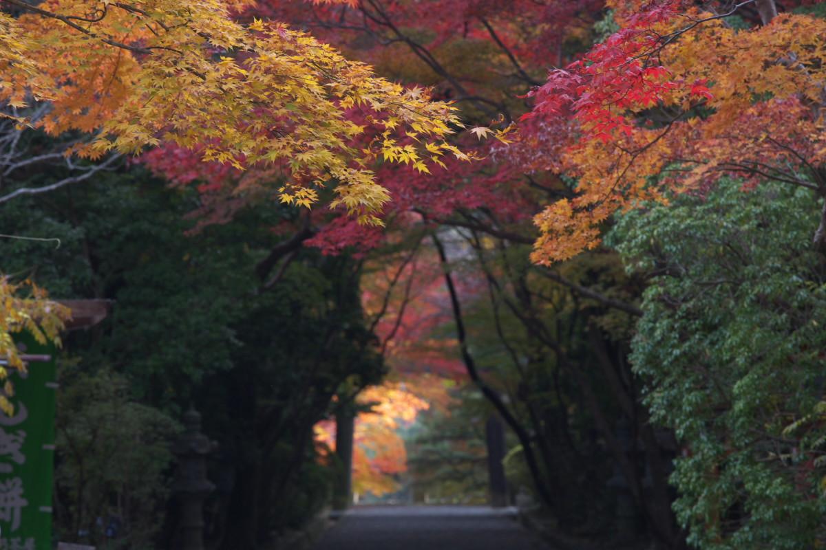 紅葉 2011 西山 大原野神社_f0021869_10522242.jpg