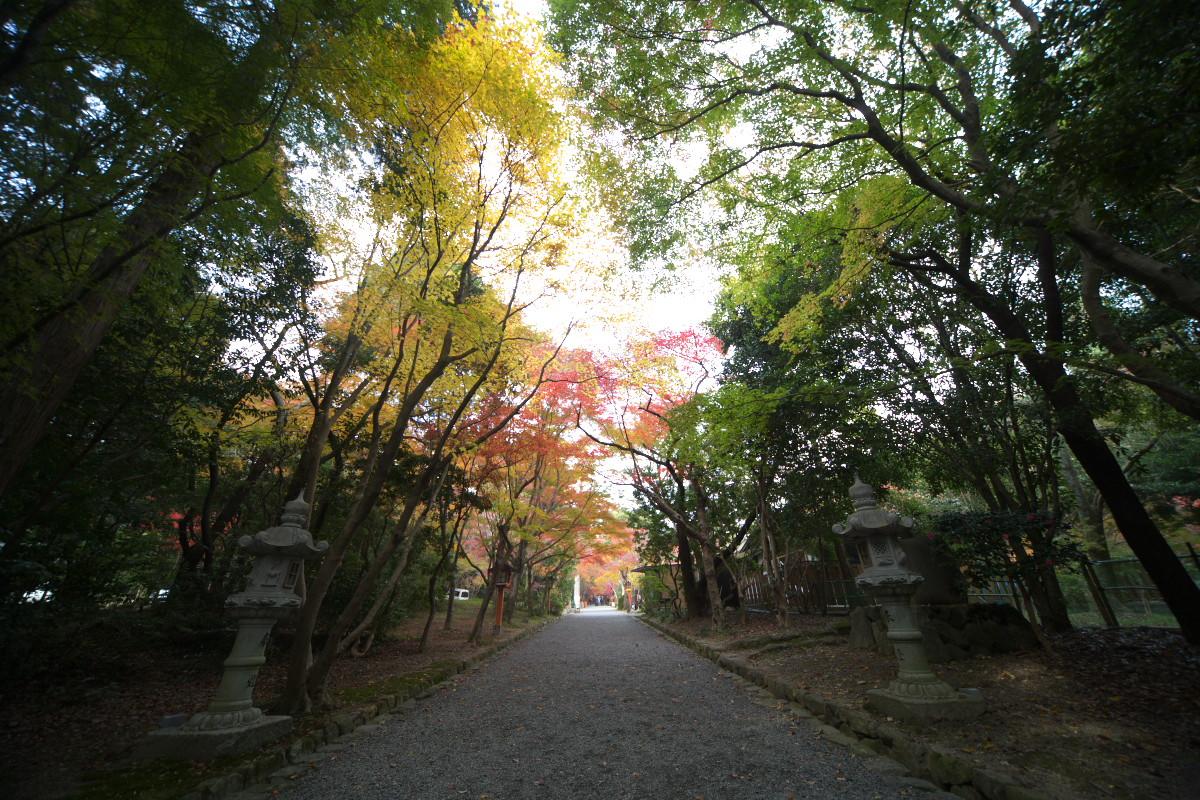 紅葉 2011 西山 大原野神社_f0021869_10553199.jpg