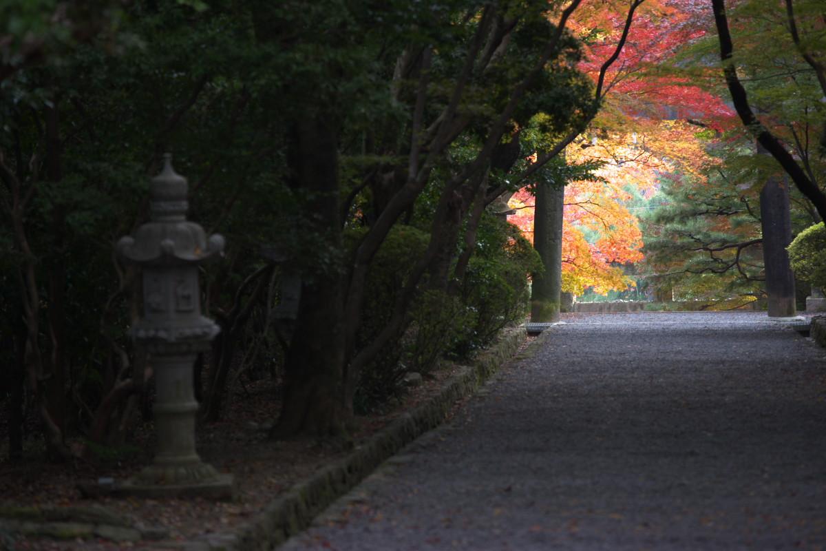 紅葉 2011 西山 大原野神社_f0021869_1057176.jpg