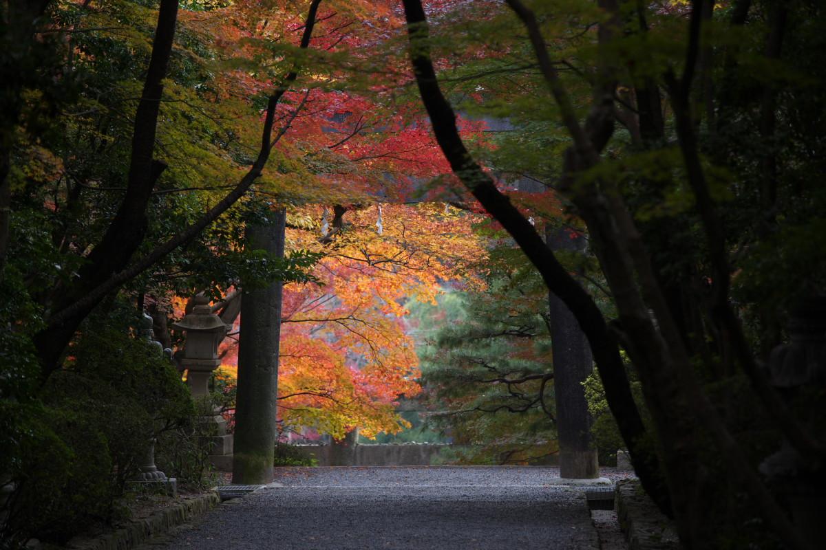 紅葉 2011 西山 大原野神社_f0021869_1058516.jpg