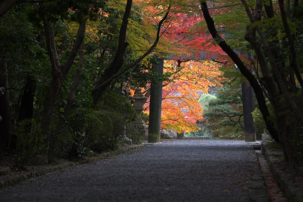 紅葉 2011 西山 大原野神社_f0021869_10585645.jpg