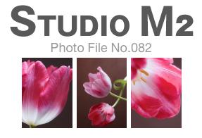 STUDIO M2 Photo File No.082「ガンダーズラプソディという名のチューリップ」_a0002672_1219075.jpg