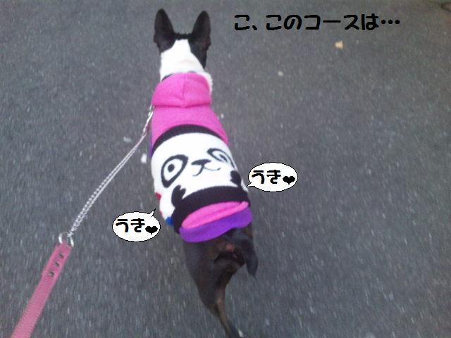 ★Cu;Bru の沖縄祭りに腹巻犬乱入★_d0187891_10283495.jpg