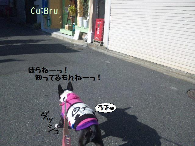 ★Cu;Bru の沖縄祭りに腹巻犬乱入★_d0187891_10284255.jpg