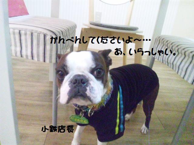 ★Cu;Bru の沖縄祭りに腹巻犬乱入★_d0187891_10285532.jpg