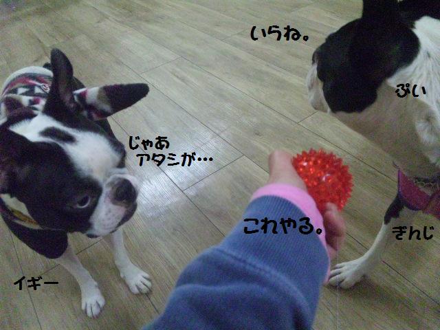 ★Cu;Bru の沖縄祭りに腹巻犬乱入★_d0187891_10292720.jpg