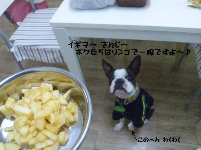 ★Cu;Bru の沖縄祭りに腹巻犬乱入★_d0187891_10295023.jpg