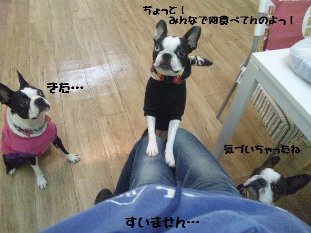 ★Cu;Bru の沖縄祭りに腹巻犬乱入★_d0187891_10301837.jpg