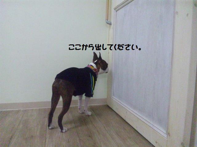 ★Cu;Bru の沖縄祭りに腹巻犬乱入★_d0187891_10302411.jpg