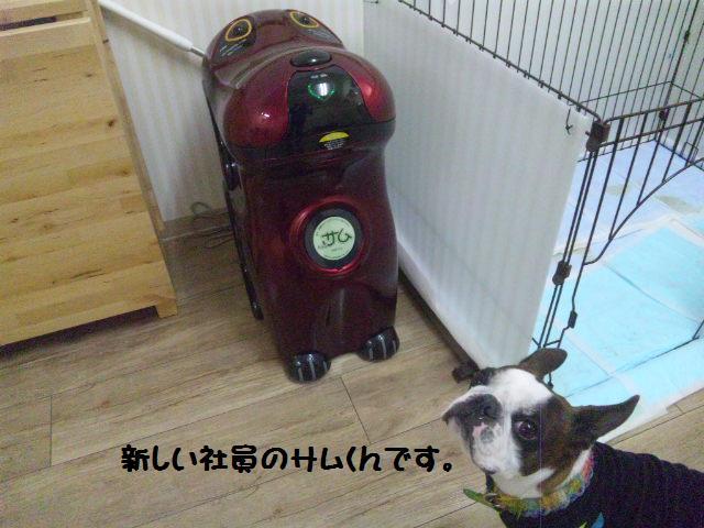 ★Cu;Bru の沖縄祭りに腹巻犬乱入★_d0187891_10303816.jpg
