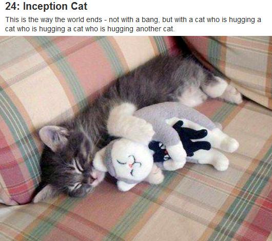 今年ソーシャル・メディア上で話題になった最も重要な30匹の猫ちゃん The 30 Most Important Cats Of 2011_b0007805_13115539.jpg