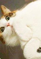 今年ソーシャル・メディア上で話題になった最も重要な30匹の猫ちゃん The 30 Most Important Cats Of 2011_b0007805_13121025.jpg