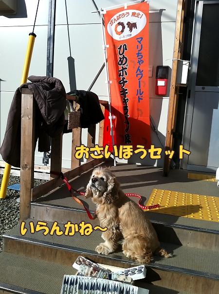 まりちゃん_b0067012_1031899.jpg