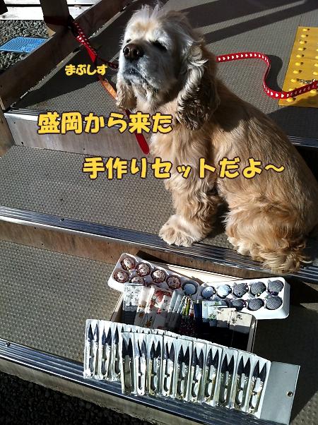 まりちゃん_b0067012_10322971.jpg