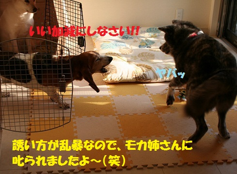 f0121712_15125179.jpg