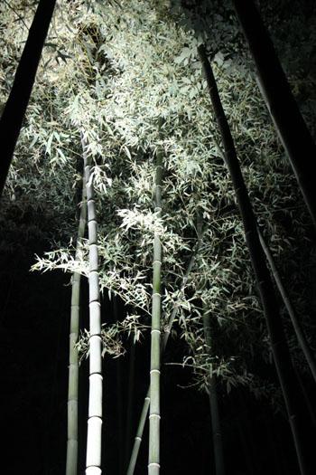 京都・嵐山花灯路ー2011_e0048413_18561541.jpg