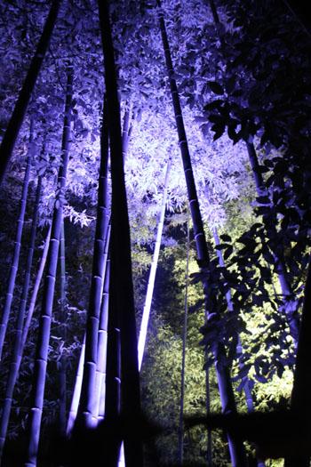 京都・嵐山花灯路ー2011_e0048413_18562559.jpg