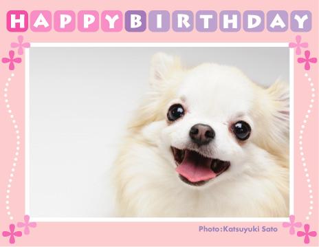 ソプラノちゃん、お誕生日おめでとう♪_d0102523_0534772.jpg