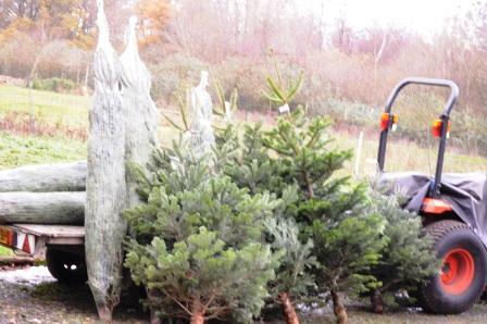 チキンにクランベリーソースとクリスマスツリーとプチパーティー_d0104926_5411274.jpg