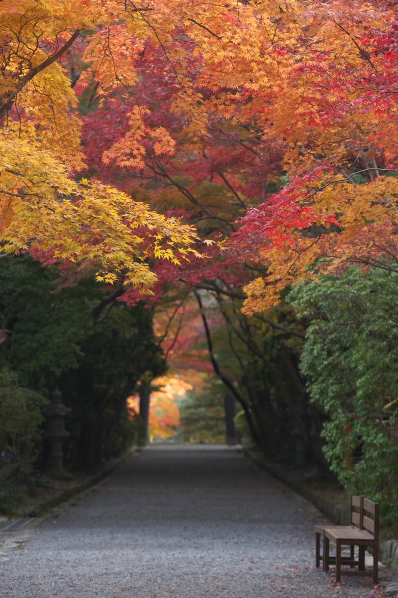 紅葉 2011 西山 大原野神社_f0021869_12164090.jpg