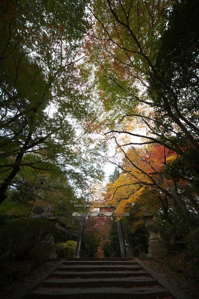 紅葉 2011 西山 大原野神社_f0021869_12181691.jpg