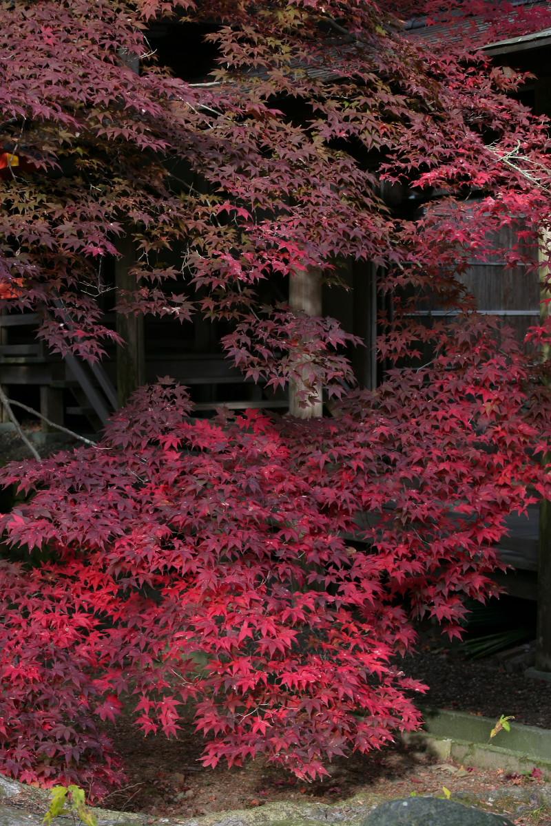 紅葉 2011 西山 大原野神社_f0021869_12242026.jpg