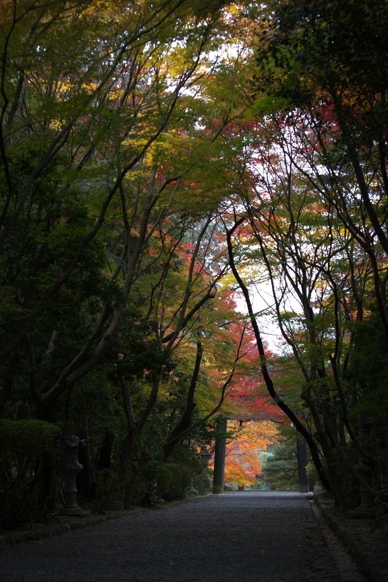 紅葉 2011 西山 大原野神社_f0021869_12263015.jpg