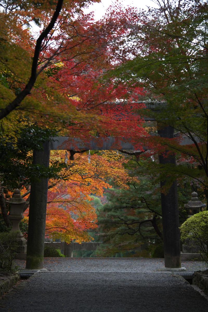 紅葉 2011 西山 大原野神社_f0021869_12303074.jpg