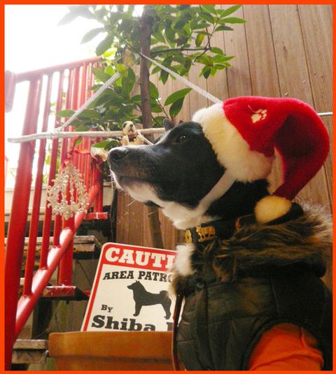 """静香家のクリスマス・デコレーション。""""はやく来て~~ェ!""""_e0236072_2010231.jpg"""
