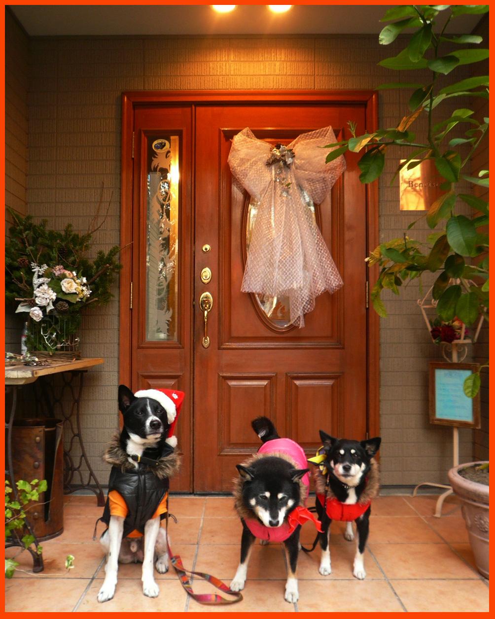 """静香家のクリスマス・デコレーション。""""はやく来て~~ェ!""""_e0236072_20143666.jpg"""