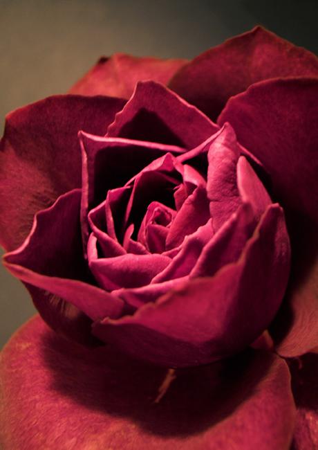 紫の香り_e0243332_20152100.jpg