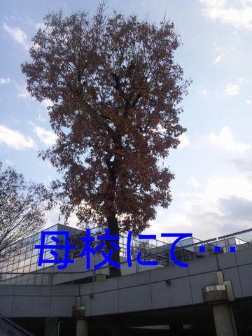 c0101739_147020.jpg