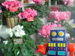 17/Dec/2011,Sat, The flower shop ポポのお気に入り_e0005548_8235826.jpg