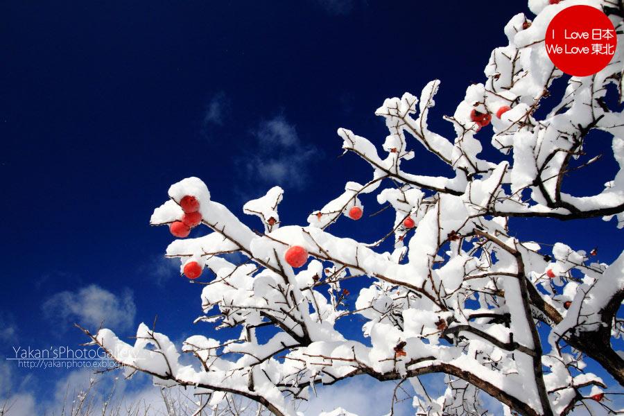 雪の晴れ間に^^_b0157849_16343615.jpg