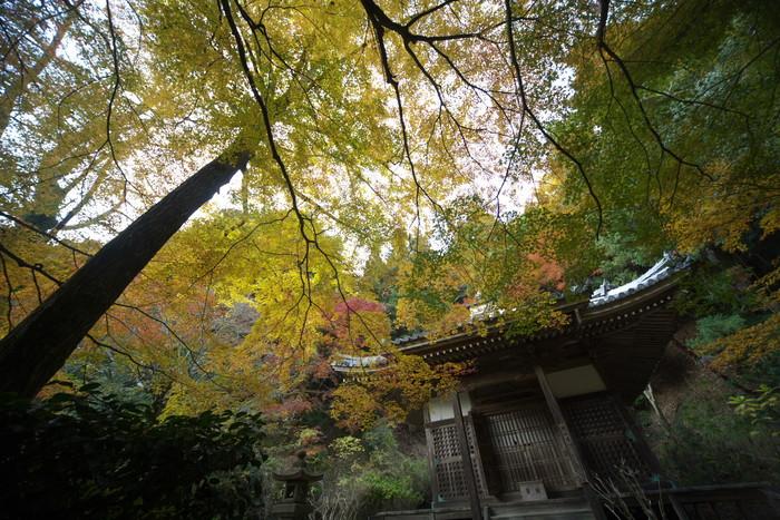 紅葉 2011 西山 金蔵寺_f0021869_1343851.jpg