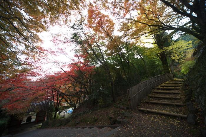 紅葉 2011 西山 金蔵寺_f0021869_13465120.jpg