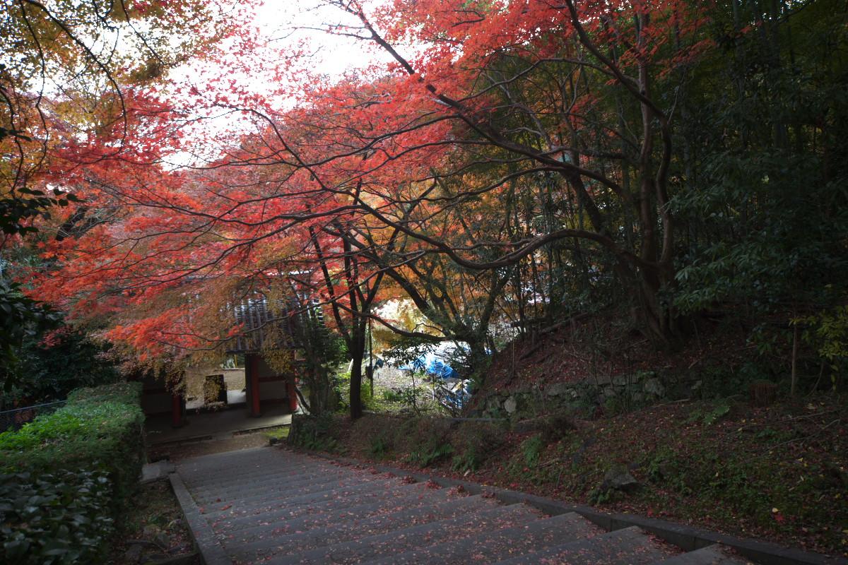 紅葉 2011 西山 金蔵寺_f0021869_1348571.jpg