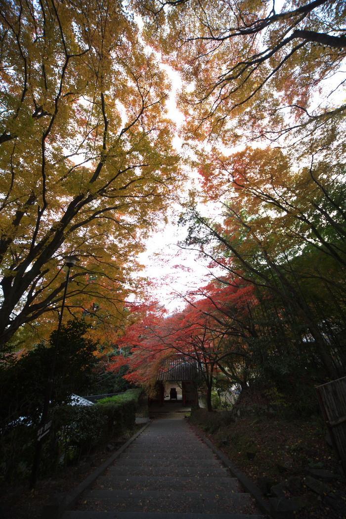 紅葉 2011 西山 金蔵寺_f0021869_1356111.jpg