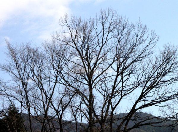 岩倉の里山_e0048413_17175760.jpg
