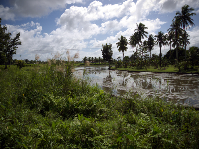 Idle Rice Field_e0202828_6325273.jpg