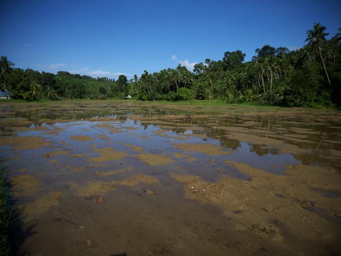 Idle Rice Field_e0202828_6353164.jpg