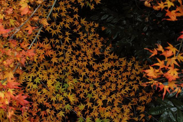 26番の秋!_b0160331_1719021.jpg
