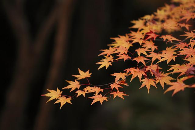26番の秋!_b0160331_17211525.jpg