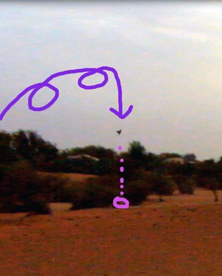夜明けの鷹狩り(2)・・・ハヤブサの技_c0067690_6292822.jpg