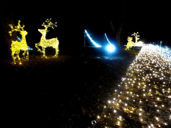 府立植物園 クリスマスイルミネーション_e0048413_21344689.jpg