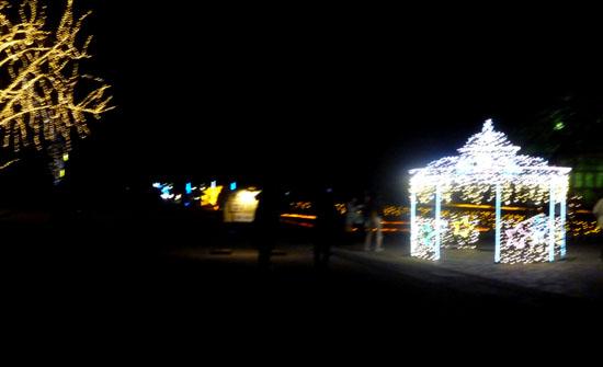 府立植物園 クリスマスイルミネーション_e0048413_21345874.jpg